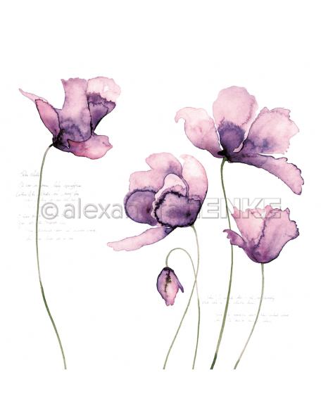 Alexandra Renke Cardstock de una cara 30,5x30,5 cm, Grandes Tulipanes Violeta/Große Tulpen violet