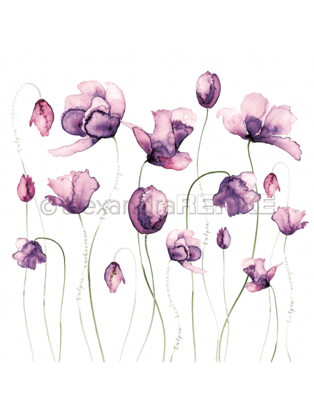 Alexandra Renke Cardstock de una cara 30,5x30,5 cm, Variedad Tulipanes Violeta/Viele Tulpen violet