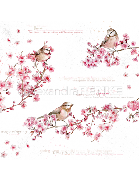 Alexandra Renke Cardstock de una cara 30,5x30,5 cm, Pajaros en Flores de Cerezo/Vögel in Kirschblüten