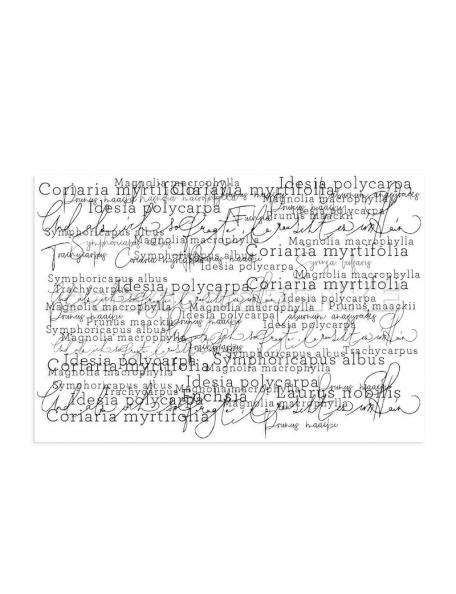 alexandra renke sello/Clear Stamp, gemischte Typo