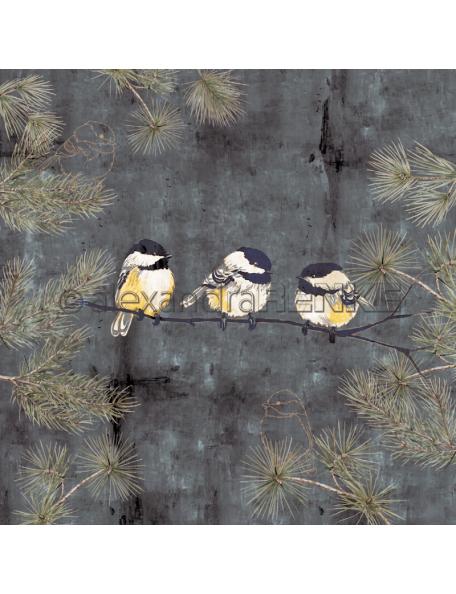 Alexandra Renke Cardstock una cara 30,5x30,5 cm, Winterbirds Kohlmeise