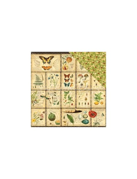 """Graphic 45 Nature Sketchbook Cardstock de doble cara 12""""X12"""", Diary of a Botanist"""